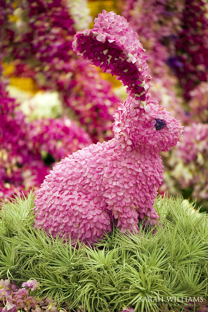 Chelsea Flower Show 21st May 2014